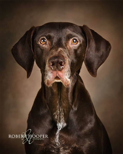 Crawley dog photography Sussex